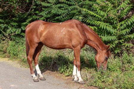 A free horse eating grass 写真素材