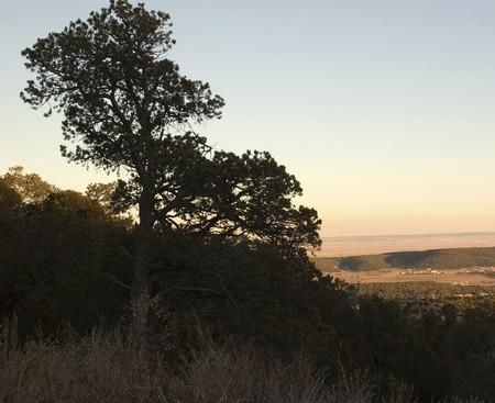 The sunset casting a golden hue on the desert prairie Banco de Imagens