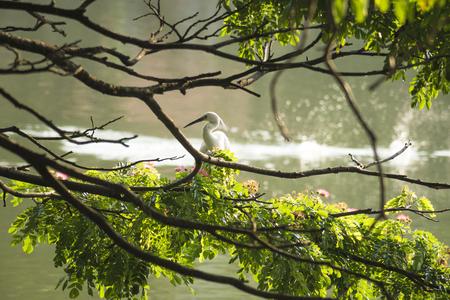 kandy: Kandy lake bird