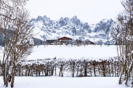 Wilder Kaiser mountainrange between trees with snow during winter, Going am Wilden Kaiser, Tyrol, Austria