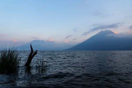 Volcanoes with clouds and tree with bird during sunset at Lake Atitlan in the background at the shore of San Marcos, Guatemala Imagens