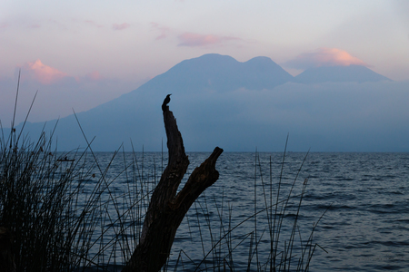 Bird on a tree during sunset at Lake Atitlan with volcanoes in the background at the shore of San Marcos, Guatemala Imagens