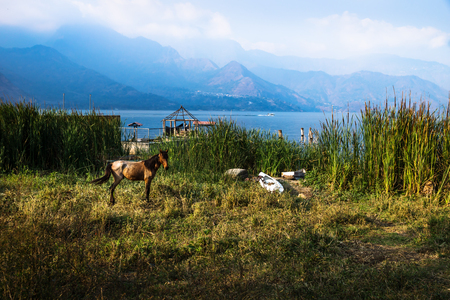 Horse posing on a meadow along Lago Atitlan with mountainrange and backlight, San Juan la Laguna, Guatemala, Central America