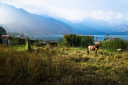 Horse on a meadow along Lago Atitlan with mountainrange and backlight, San Juan la Laguna, Guatemala, Central America Stock Photo