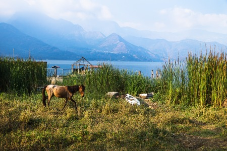 Horse walking on a meadow along Lago Atitlan with mountainrange and backlight, San Juan la Laguna, Guatemala, Central America Stock Photo
