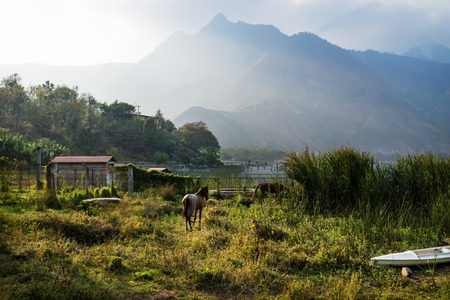 Horse on a meadow along Lago Atitlan with mountain peaks and backlight, San Juan la Laguna, Guatemala, Central America