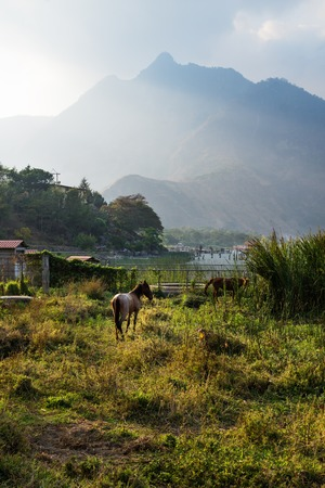 Horse on a meadow along Lago Atitlan with mountain peak and backlight vertical, San Juan la Laguna, Guatemala, Central America