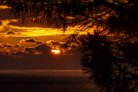 Pine tree branches in front of sunset behind the clouds with last light on the ocean, focus on clouds, Dubrovnik, Croatia
