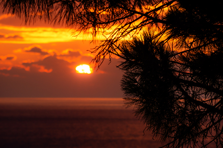 Pine tree branches in front of sunset behind the clouds with last light on the ocean, Dubrovnik, Croatia Stock Photo