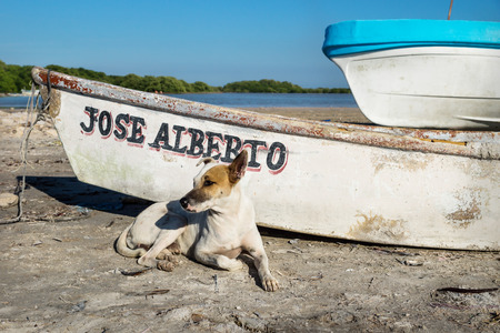 White brown dog in village lying along a rustic boat, Chelem, Mexico