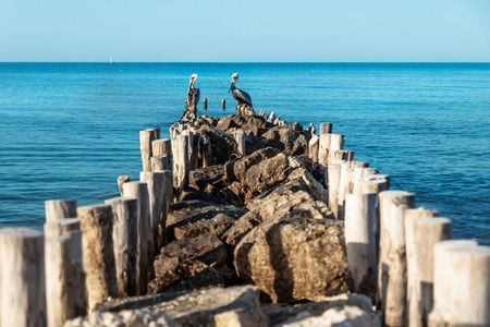 Two pelicans at the end of a stone pier with blue ocean water around, Chelem, Mexico