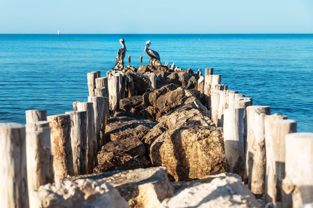 Pelicans out of focus at the end of a stone pier with blue ocean water around, Chelem, Mexico