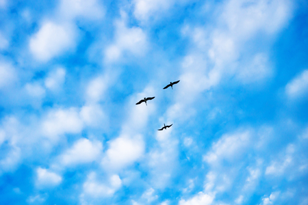 Three gulls on a sunny small cloud sky with blue, Chelem, Mexico
