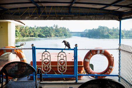Crow on deck of ferry on kollam kottapuram waterway along river with palm trees, Kerala, India Standard-Bild