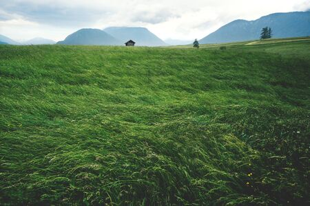 Blown high grass meadow in Austrian mountain landscape during stormy windy weather, Mieminger Plateau, Tyrol, Austia