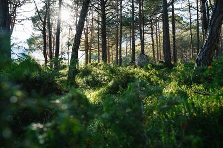 Mystical green forest with large rocks, evergreen trees and backlight sun, Mieming, Austria