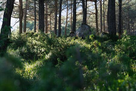 Energetic sunny green forest with large rocks and evergreen trees, Mieming, Austria