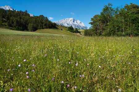 Austrian summer countryside with green flower meadow, evergreen forest and rocky mountains, Mieminger Plateau, Tyrol, Austria Stock Photo
