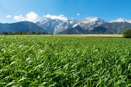 Agricaltural fields along the rocky mountain range with typical small Austrian church at sunny summer day, Mieming, Austria