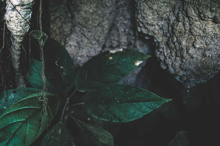Dark detail of tropical roots and dark leaves in earth in Palenque, Chiapas, Mexico
