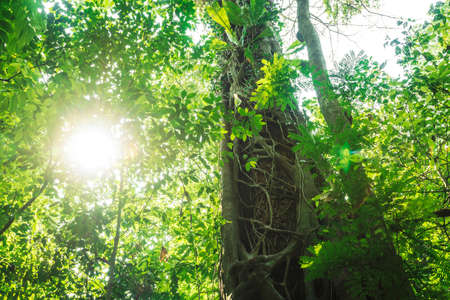 Sunlit tropical green forest with trees, ivy, palm leaves and, Palenque, Chiapas, Mexico Imagens
