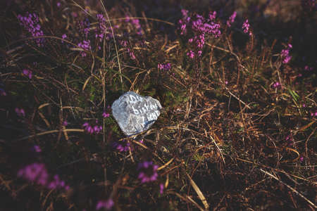Stone with motivating German text 'You are the light' on forest floor covered with pink blooming spring heath Stock Photo