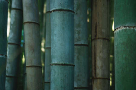 Close up of bamboo trunks in moody mystical forest at Arashiyama in Kyoto, Japan