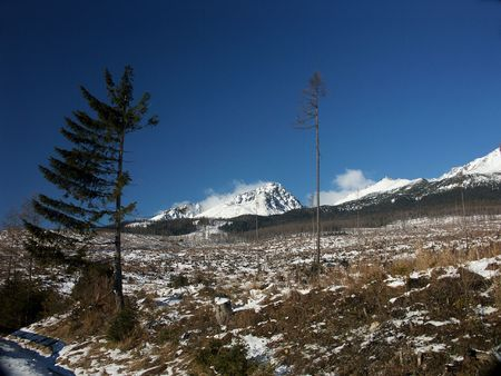 catastrophic: Catastrophic windthrow damage in Slovac Mountains