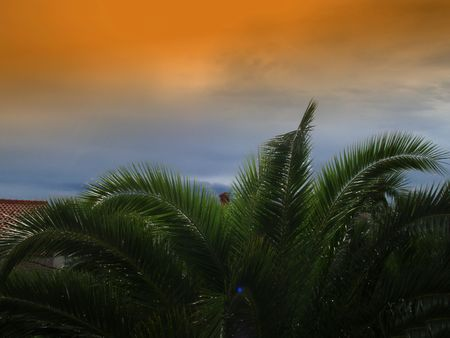 Sunset in Croatien and palmas photo
