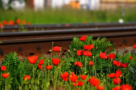 oxidate: A view of a rusty railroad and poppies Stock Photo