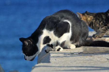 Cats at Limassol molo