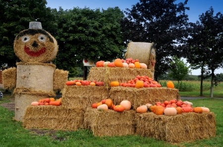 stash: Pumpkins on display at farm market, afternoon autumn sun