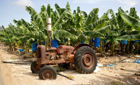 decommissioning: Banana plantation on Cyprus Stock Photo
