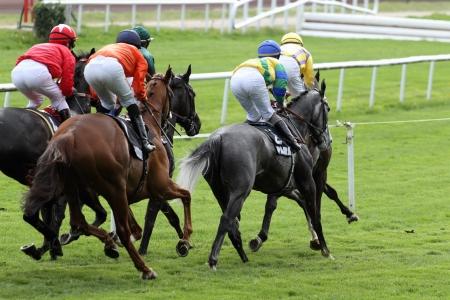 cavallo in corsa: Dettagli di un cavallo da corsa