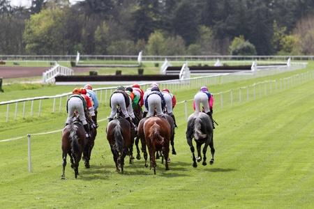 horse races: detalles de un caballo de carreras