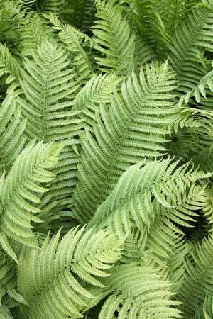 detalles de las plantas de helecho