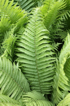 details of fern plants photo