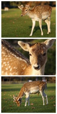 deatails de un ciervo en barbecho