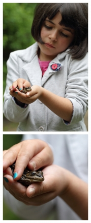 details of a young girl holding a frog in his hands Stock Photo - 13702995