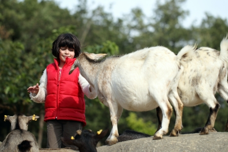 pygmy goat: details of domestic pygmy goat in farm with a girl