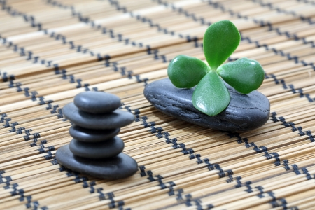 crassula ovata: Details of a tranquil scene, made of black pebbles in balance with crassula ovata Stock Photo