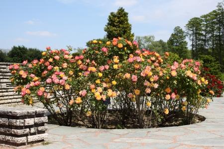 bonanza: Details of a wonderful rose garden or rosarium in Lyon.