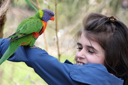 Details of a rainbow lorikeet perched on a the arm of a young girl  photo