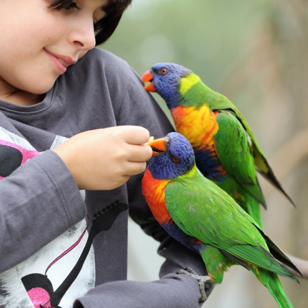 Details of a girl who is giving some food at two Rainbow Lorikeets.