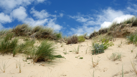 Détails of a sand dune from France in summer.