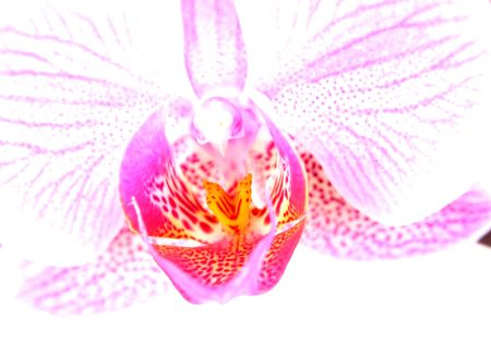 hi key orchid photo