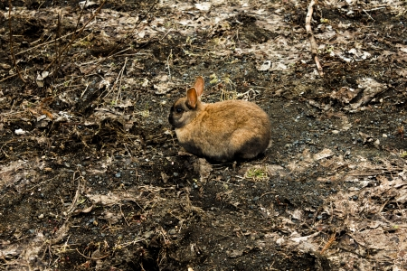 A brown bunny rabbit almost camouflaged by sorroundings Stock Photo - 17805589