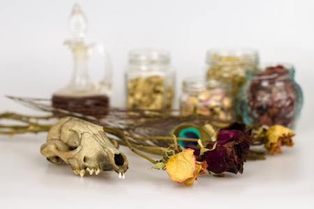 witches pantry with small animal skull and jars Stock Photo - 19904262