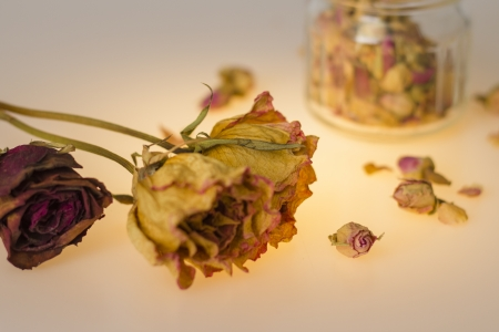 Dried flowers photo
