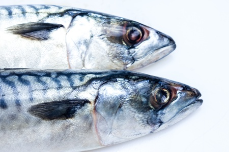 Two mackerel up close Stock Photo - 20165058